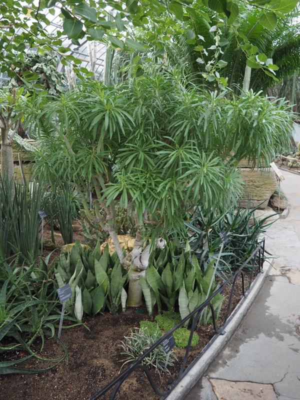 Jardin botanique de Montréal  - 13 décembre 2017 25165886018_4068c5fbee_o