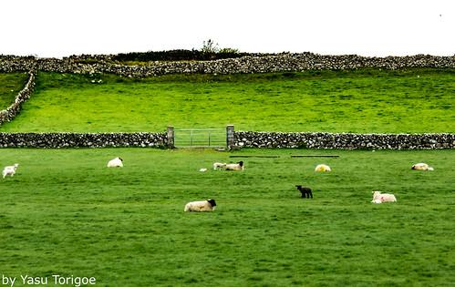 Farmland in Mayo Galway Ireland 22