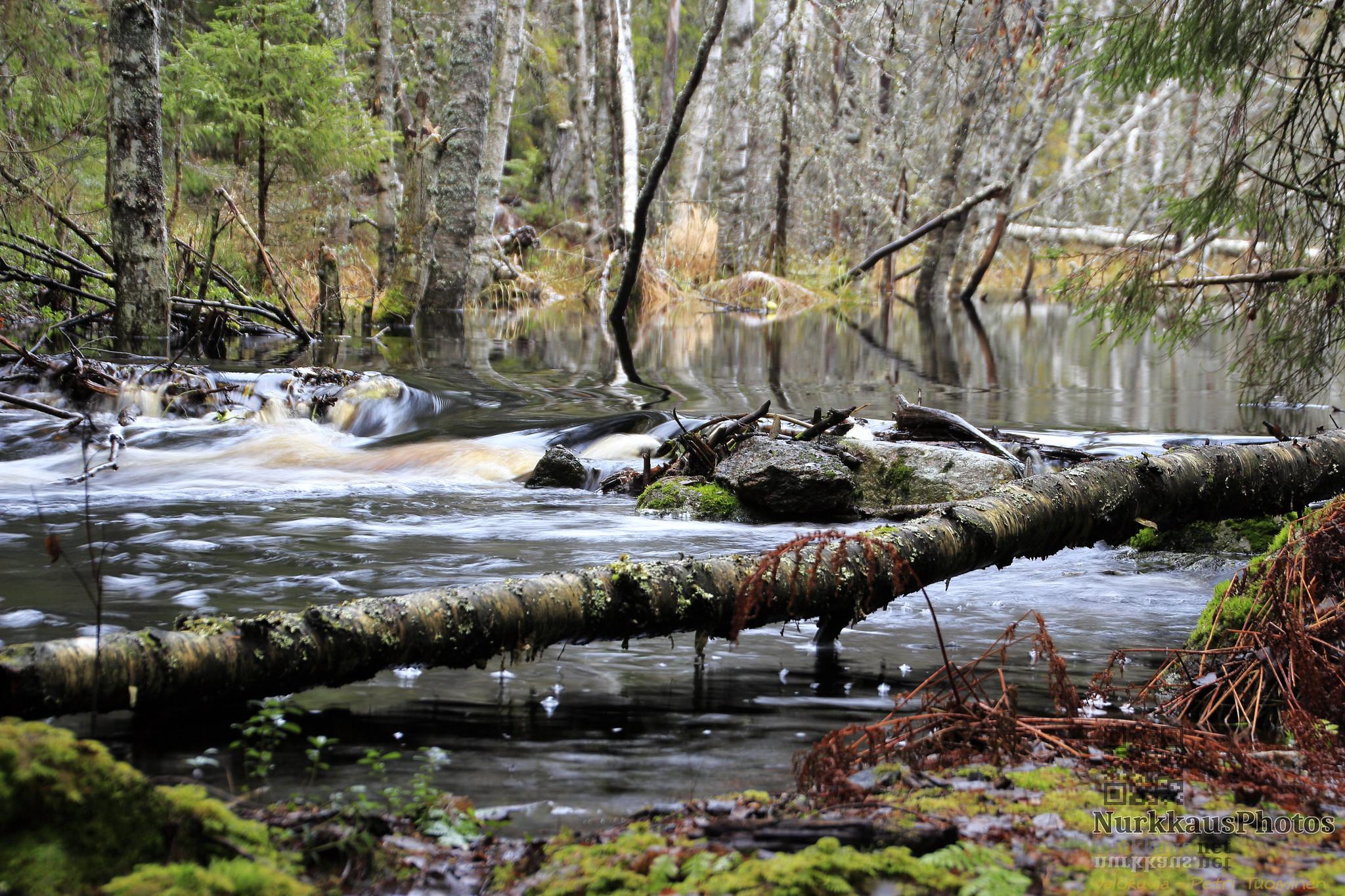 Liesijoki upriver