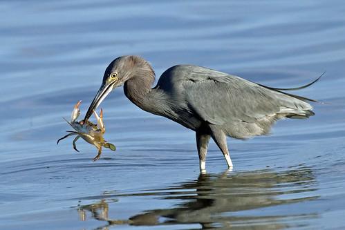 outdoor seaside shore sea sky water nature wildlife 7dm2 ocean canon florida bird heron catching