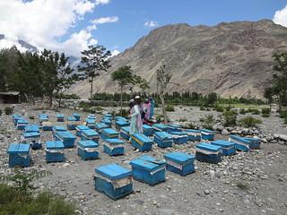 CED UST SEP Beekeepers (3)