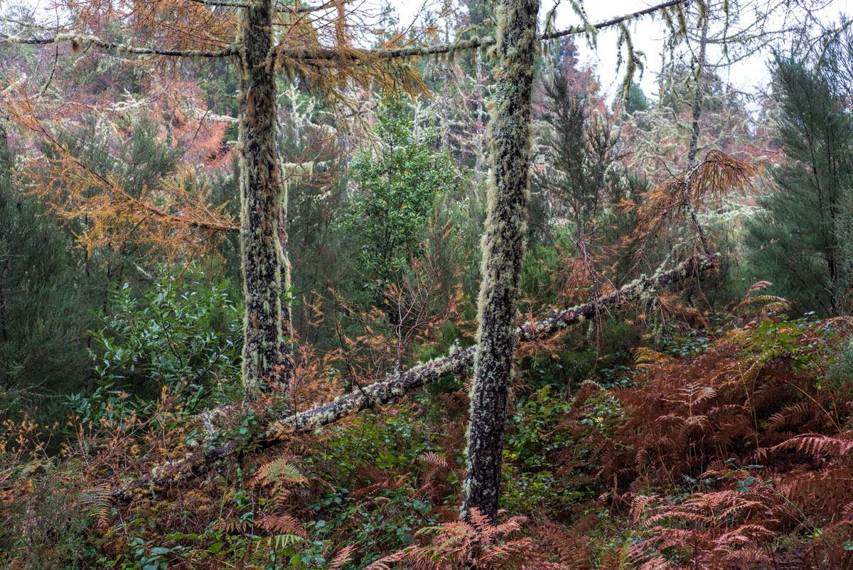 Причудливый-лес_DSC09495