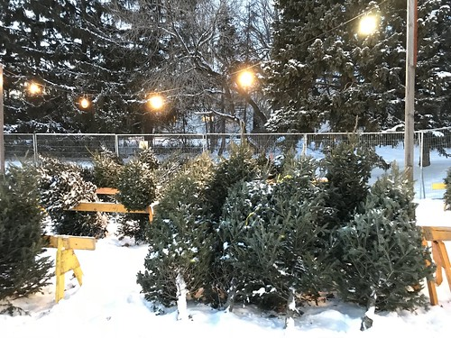 Christmas trees at the Royal Ottawa Hospital