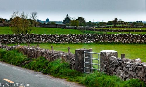 Rock Fences, Mayo Galway Ireland 21