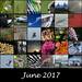 365 Mosaic - June 2017