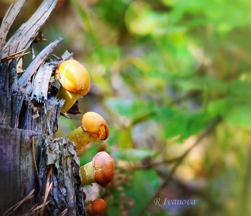 nature macro autumn fall forest wood mushroom color colors light lights outdoor sony rivanova риванова природа есен гъби гора макро пън