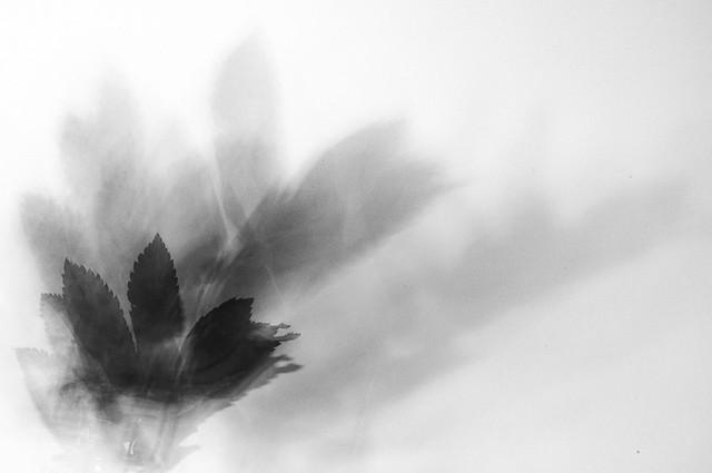 Autumn's shadowy fingers dance across my wall
