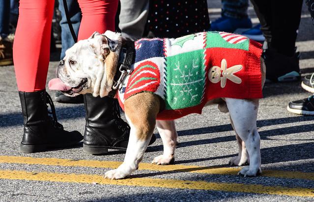 Bulldog On Parade, Hampden