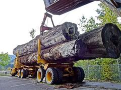 8 бывших водителей ОАО «Витебсклес» получили требование штраф до 5000 долларов