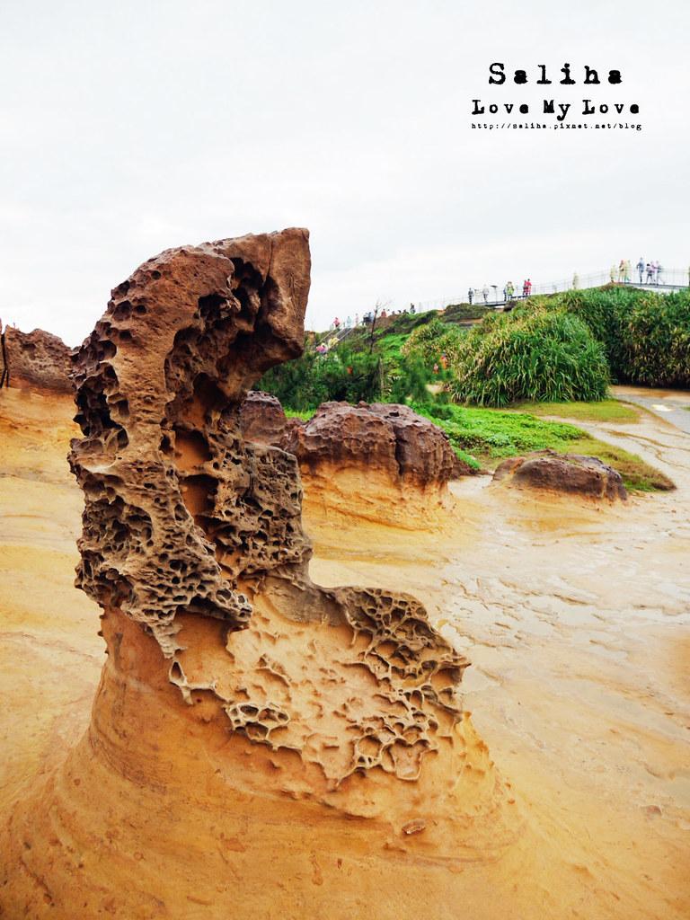 新北金山萬里一日遊景點推薦野柳地質公園 (31)