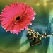 Flower 308:365 JF