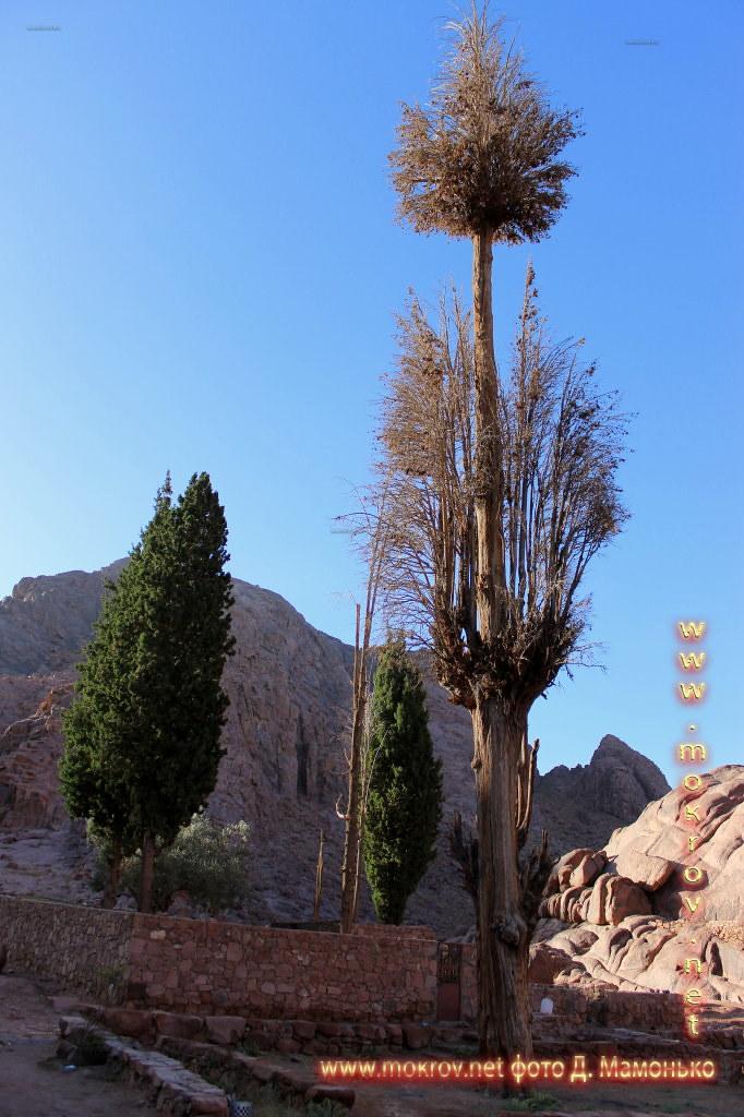Синайские горы — Египт живописные жанровые фотографии