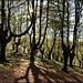 Contraluz en el bosque
