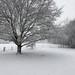 First snow in Essex