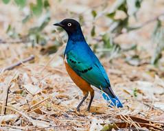 2017 small birds around Maryana lake