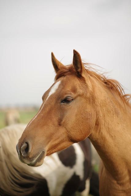 farewell, horse