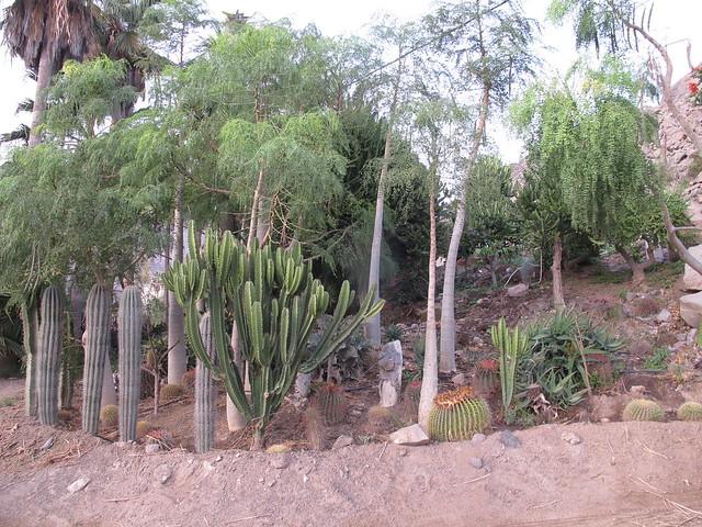 sunday, cactus, cacti, playa del cura, gran canaria
