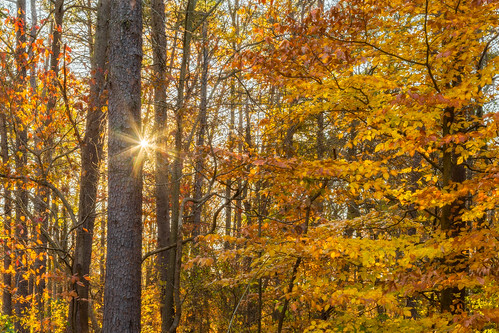 autumn landscape nature bullrunregionalpark orange leaves sunrise tree virginia forest hdr bracketexp color sunlight unitedstates yellow diffractionspikes camping dawn fall starburst centreville us