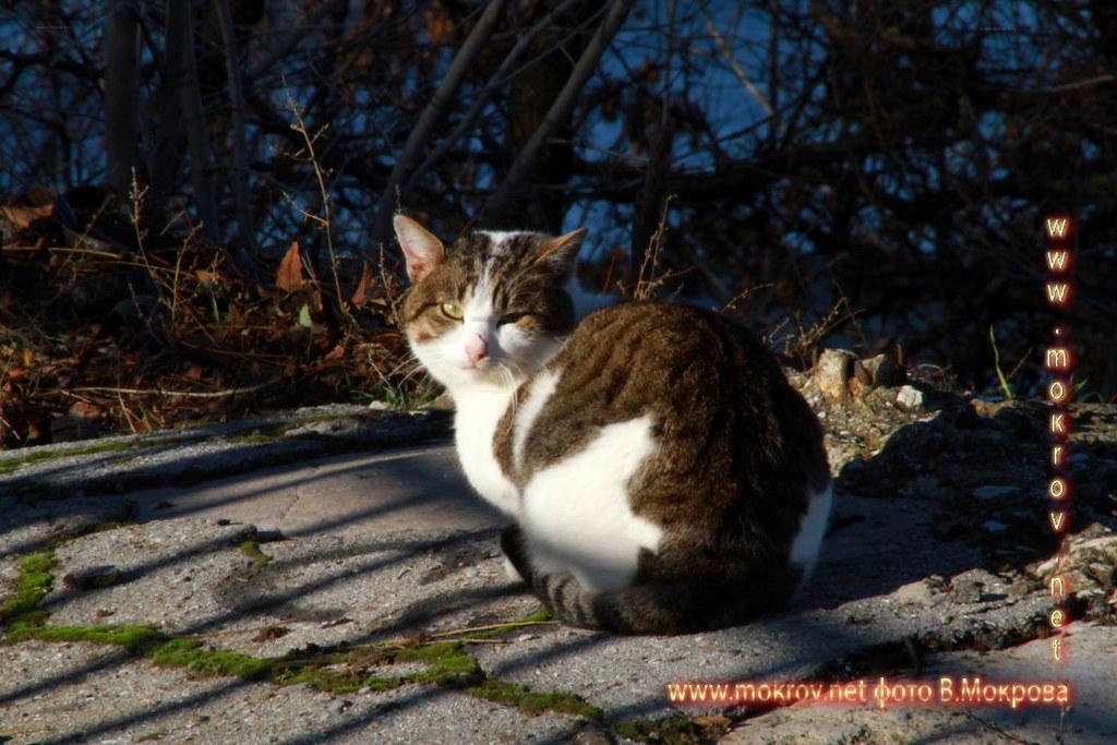 Кошки в Город Анапа,