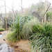South america aviary; Macaws, ducks, shore birds