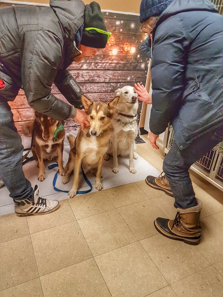 Husky Santa Paws shifty eyes