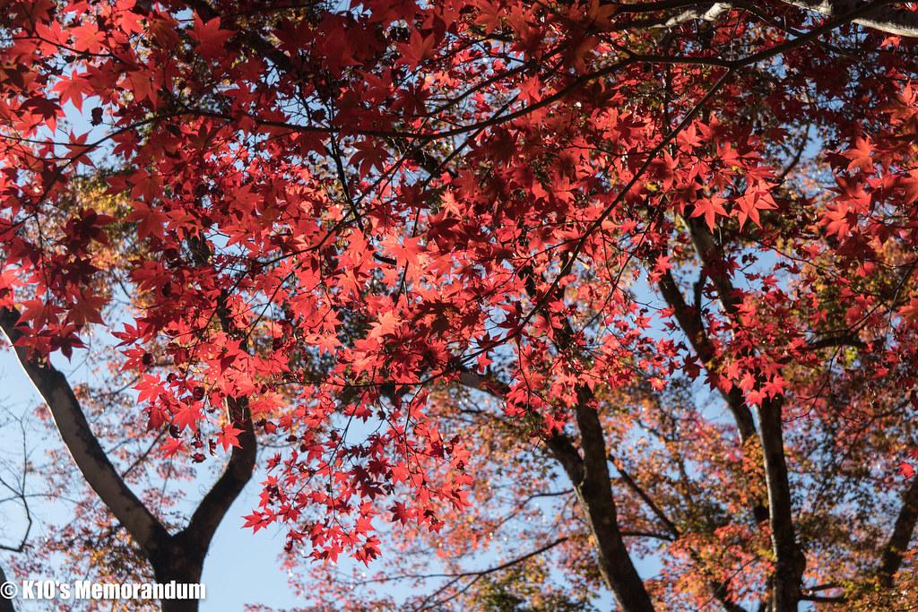 IMG_2112東郷公園