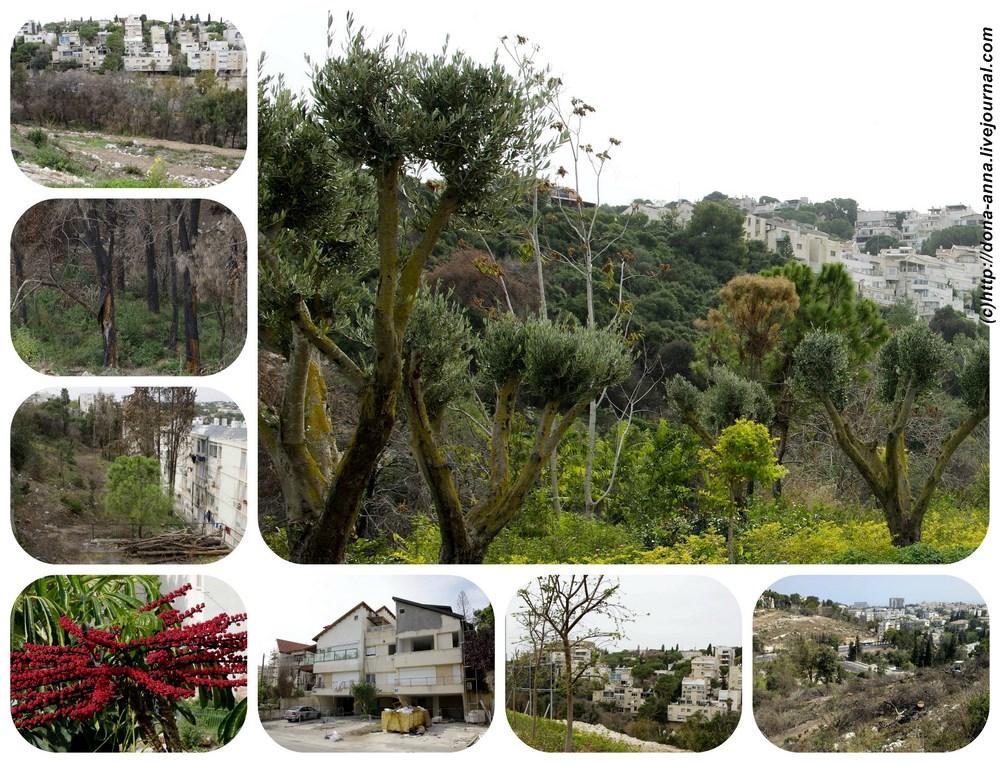 Haifa-collage-a