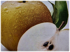 Yellowish-brown fruits of Pyrus pyrifolia (Asian Pear, Chinese Pear, Korean Pear, Japanese Pear, Taiwanese/Sand Pear), 24 Nov 2017