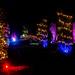 Christmas Glow RHS Wisley 02 December 2017 (22)