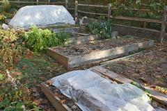 garden IMG_7200
