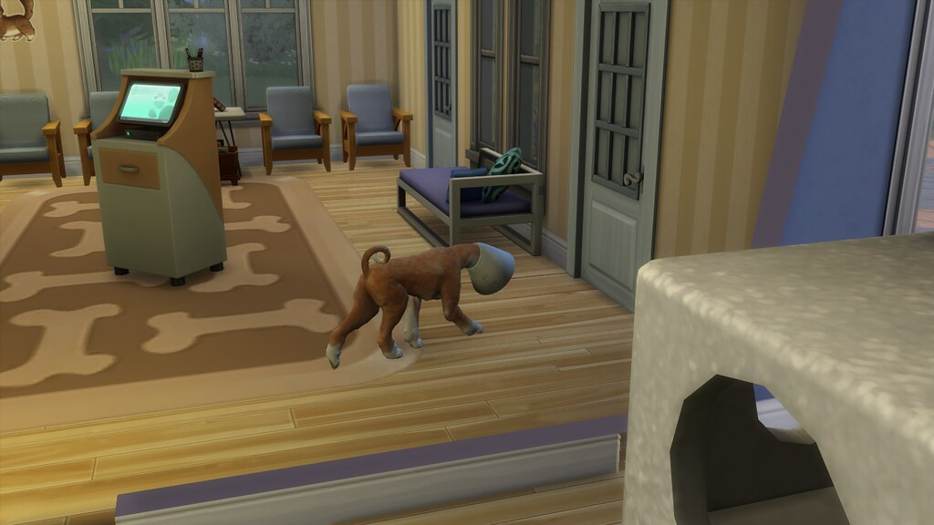 Cats Be Nice To Sims  Option
