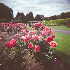 Raheny Rose Festival 2.