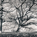 Kew Gardens -31    12112017-Edit.jpg