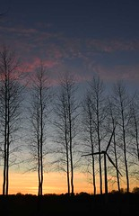 Sunset through the poplars, with wind turbines - Photo of Gouy-en-Ternois