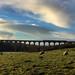Northern Rail head to Leeds
