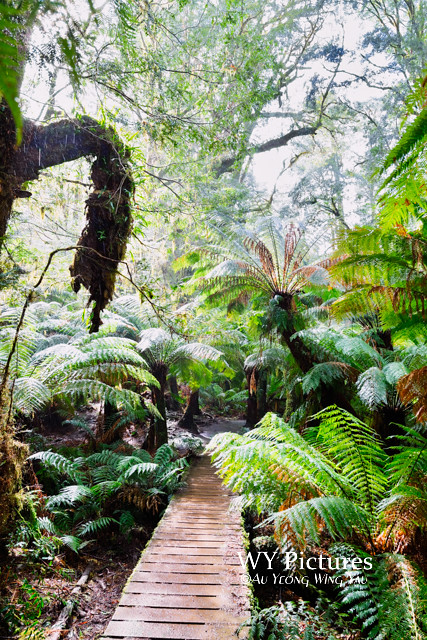 Melbourne 2017: Great Otway National Park Temperate Rainforest 3