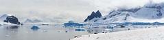 Danco Island Panorama, Antarctica / SML.20151215.7D.55347-55362.pano
