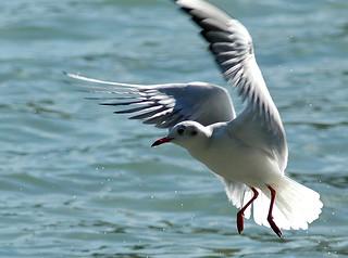 Marcel Burkhard seagull image