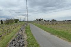 Vineyards, Saint-Germain-de-la-Rivière - Photo of Périssac