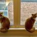 Cosmo & Jessie
