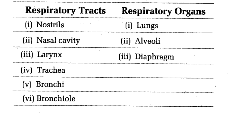 NEET Biology Breathing and Exchange of Gases Respiration 3
