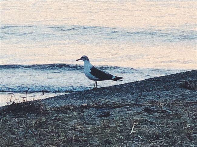 鳥のように自由になりたい