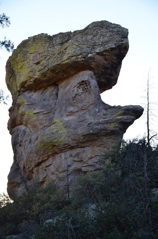 Chiricahua National Monument duck with a hat hoodoo