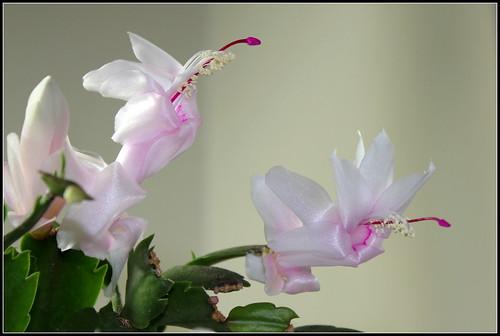 bouquets de souvenirs d'été - Page 2 37593466934_1d5633771f