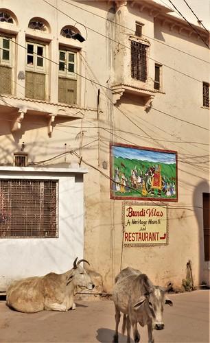 i-bundi 1-Nawal Sagar (8)