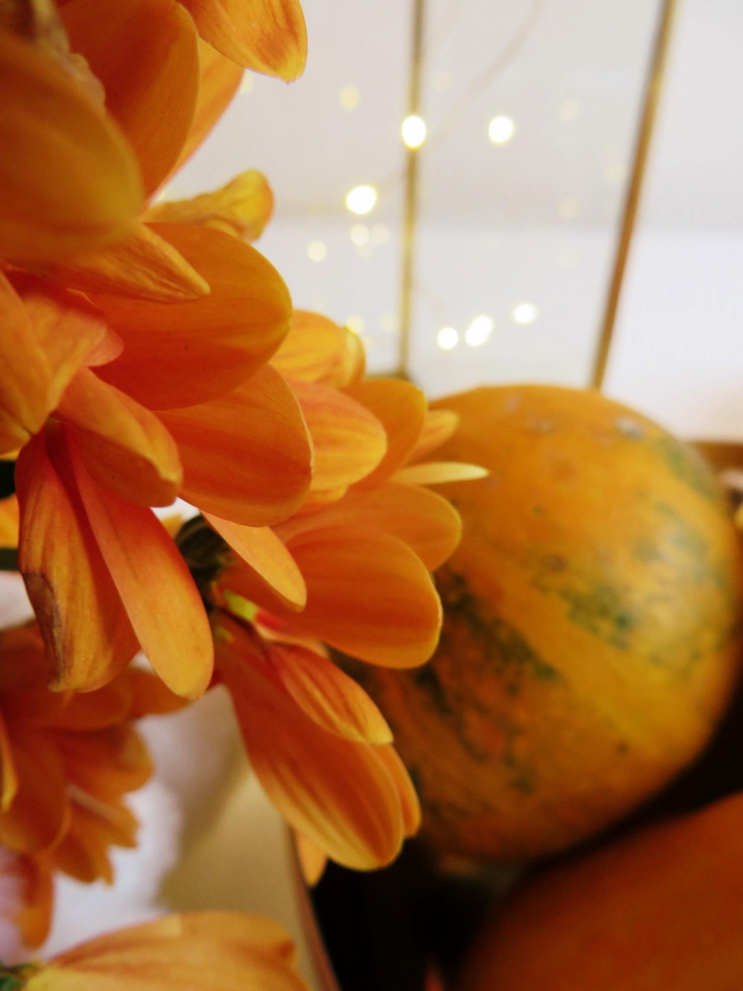 oranssiakotona5