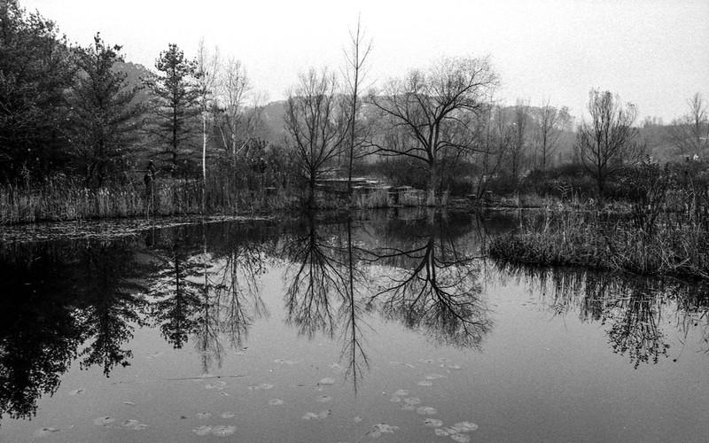 Late November Reflection