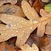 December Rain - for Flickr Friday