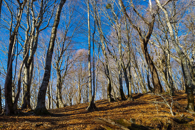 青空に・・・更に映える樹林帯