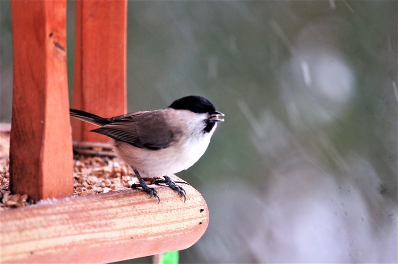 Birdhouse 10.12 (22)